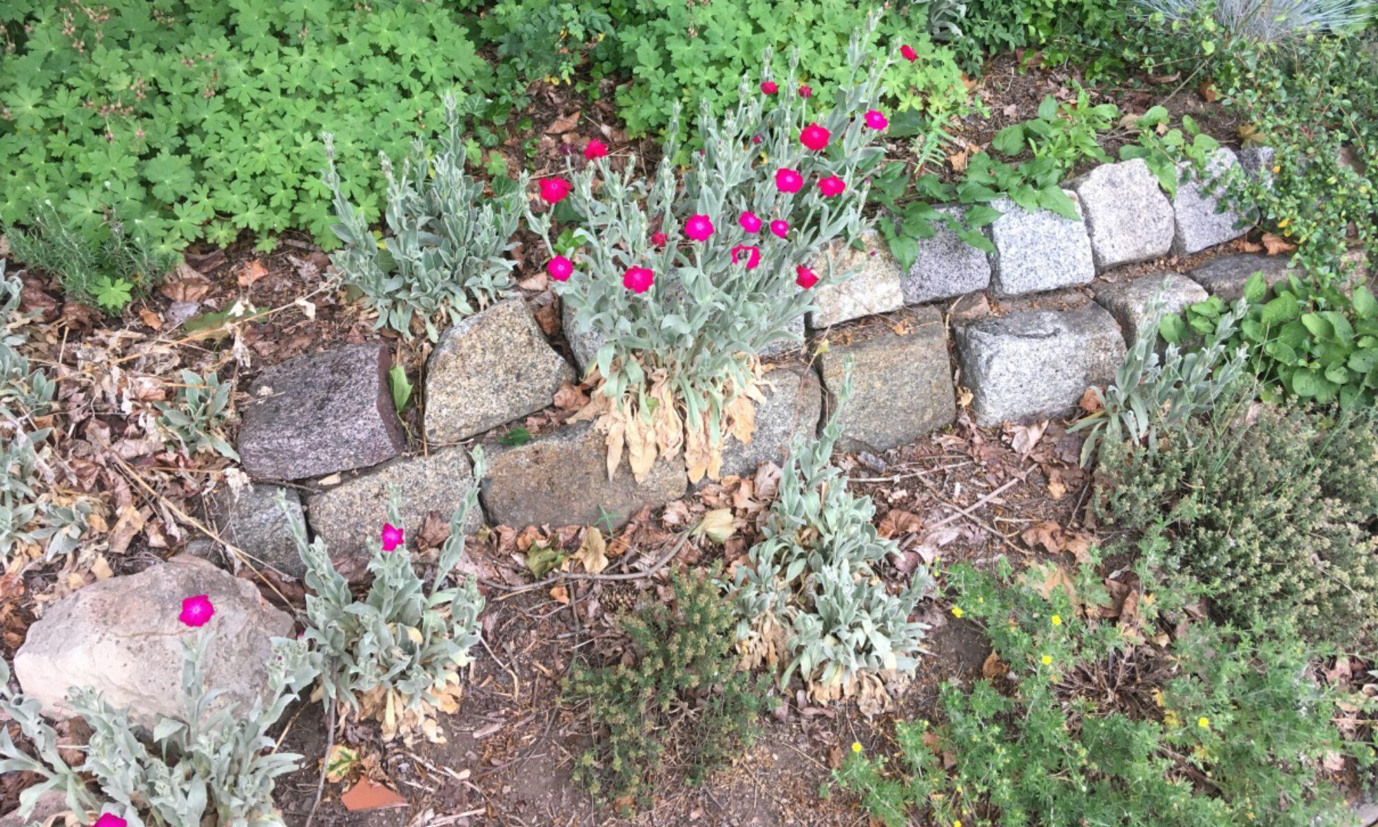 Gartentherapie Hellerau
